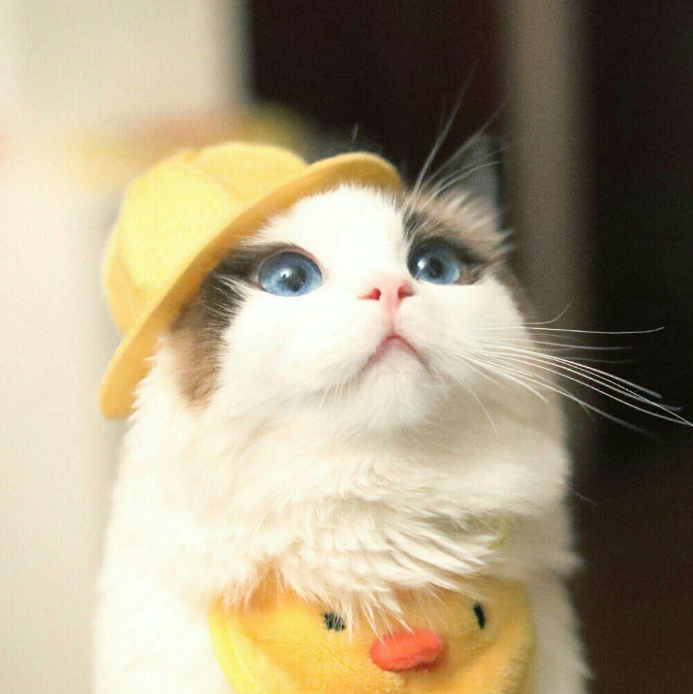 壁纸 动物 猫 猫咪 小猫 桌面 1002_1002