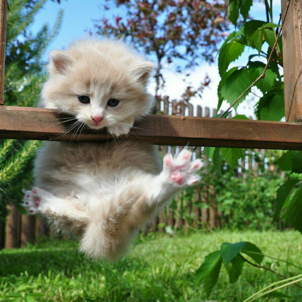 壁纸 动物 狗 狗狗 猫 猫咪 小猫 桌面 1024_1024