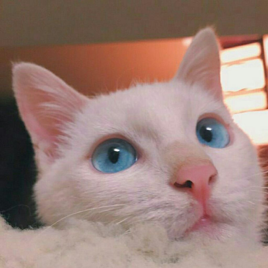 壁纸 动物 猫 猫咪 小猫 桌面 1024_1024图片