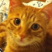 MOMO酱是只猫