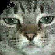 Mr猫一挠