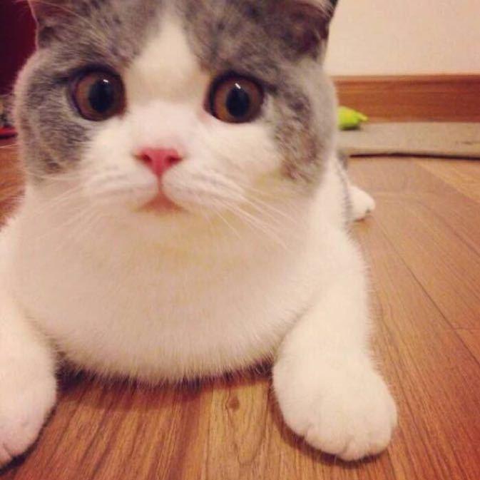 小猫拿钱可爱头像