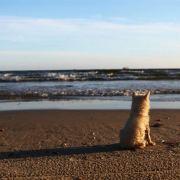 易木Cami,发布寻狗启示热爱宠物狗狗,希望流浪狗回家的狗主人。