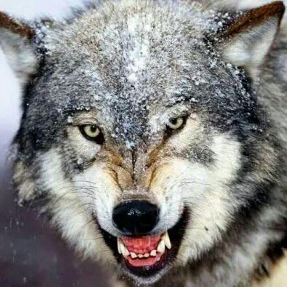 9359孤独的狼的微博_微博