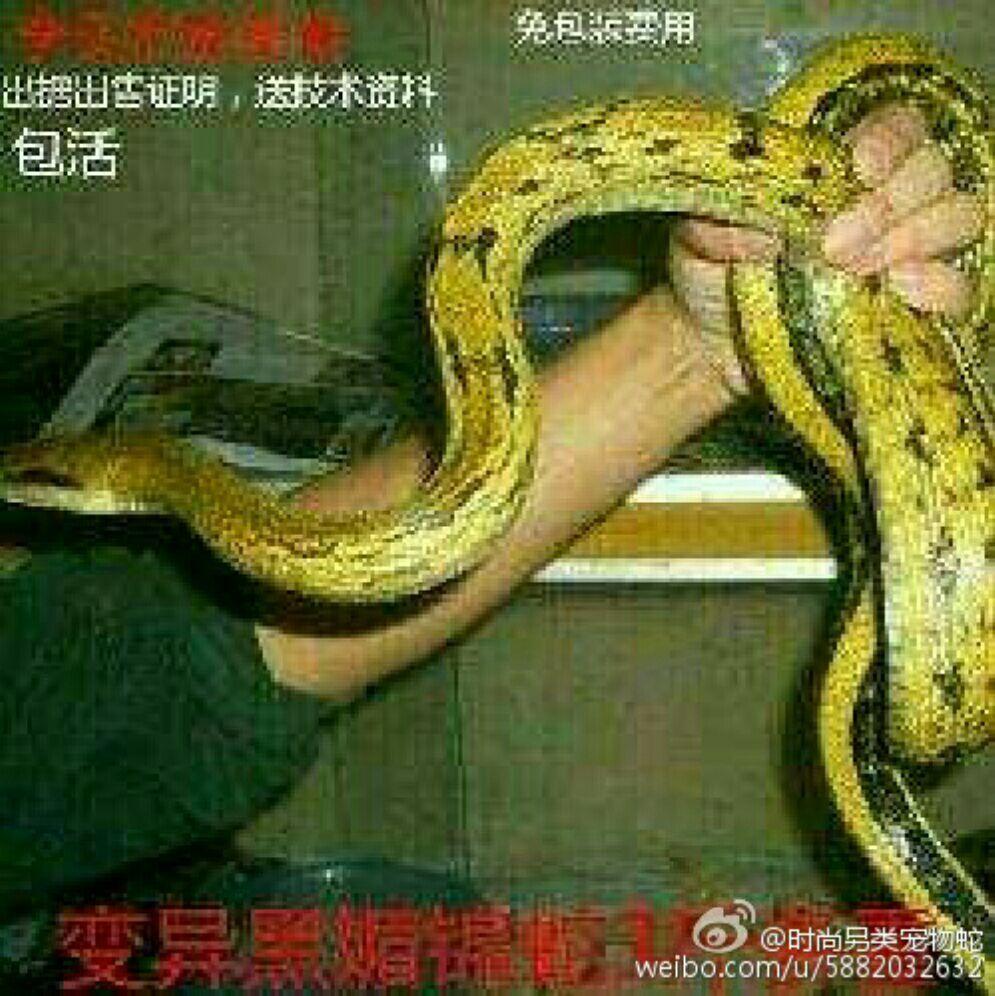 从事蛇类的人工驯养繁殖,养殖,及经营利用.