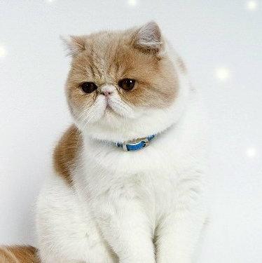 加菲猫的混乱王国