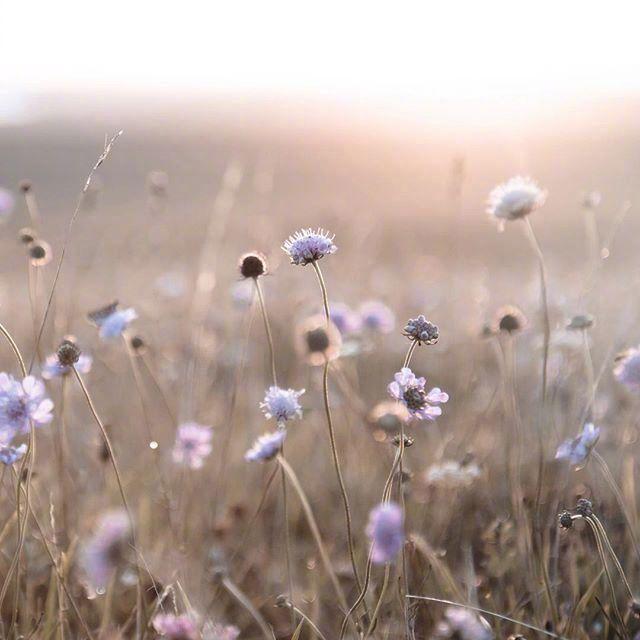 早安心情短语191030:愿你以后的生活大起起起起起起小落