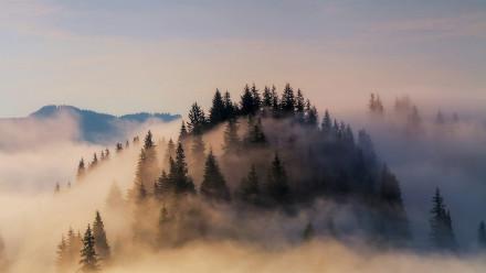 大雾笼罩下的巴伐利亚阿尔卑斯山脉