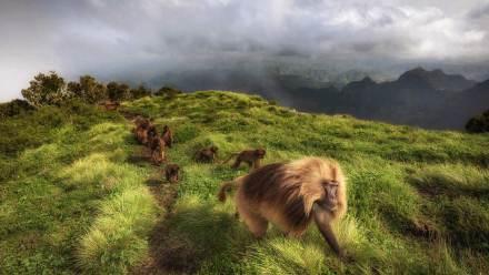 瑟门山国家公园里的狮尾狒狒