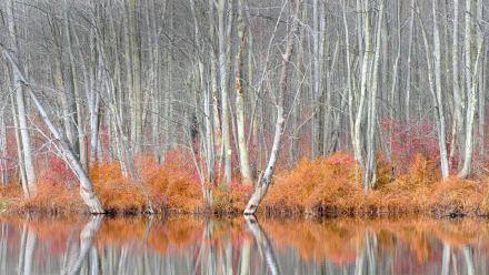 比弗湖自然中心内光秃秃的树和红盖鳞毛蕨