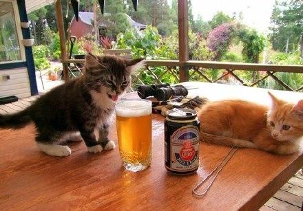 你觉得两只猫在想什么呢?