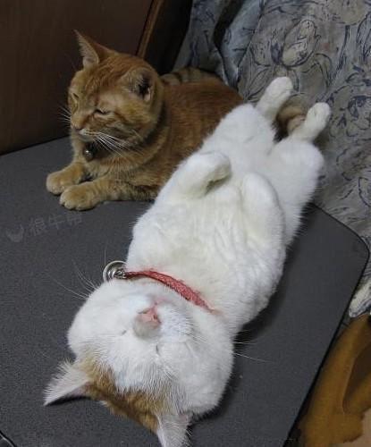 猫猫:你不睡拉倒!我先睡了~