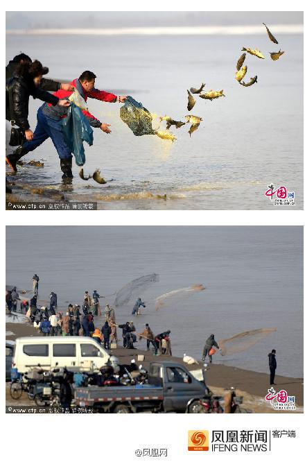 济南:20多市民购鲤鱼放生 遭50多捕鱼者疯狂捕捞