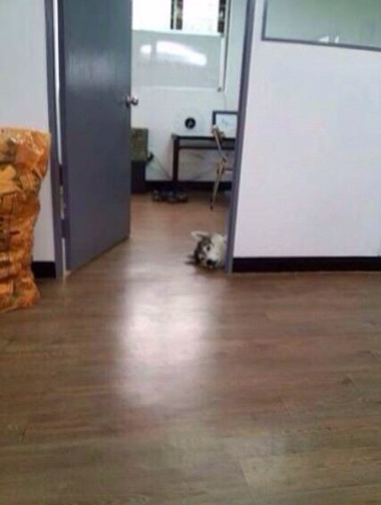 我们老板今天把狗带到了公司⋯⋯