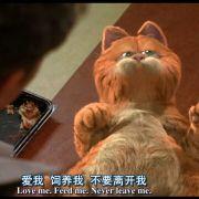 粗粮厂的猫微博照片