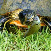 养龟就是赞