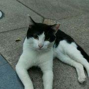 猫猫丫头717微博照片