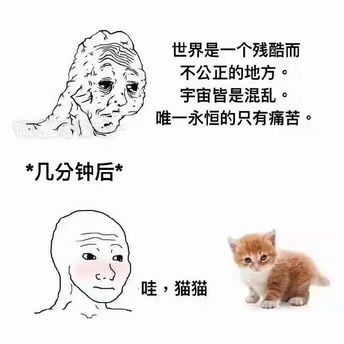 搞笑图片世界可能会冷 但小猫咪的肚子永远热乎乎的