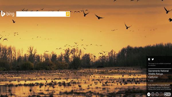 微软搜索引擎必应首页增加音频效果的照片
