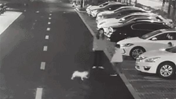 男子遛狗不拴绳,还把保护孩子的妈妈按在地上打!的照片 - 1