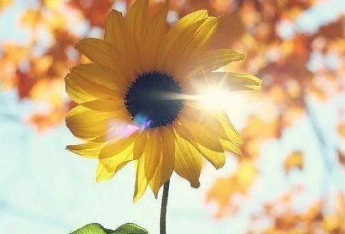 心若向阳,哪里都是晴朗