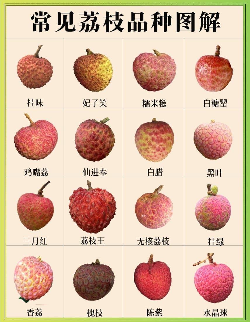 荔枝 品种