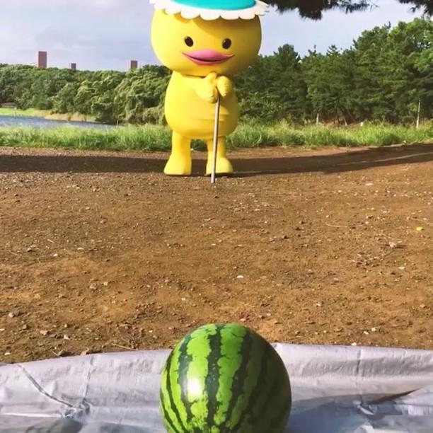 带你领略日本现实举办的只有在日剧或者动漫中才看到的大西瓜比赛 (3)
