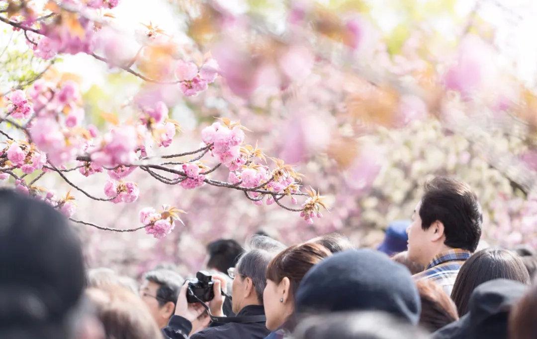 盘点日本旅行一年四季最佳时间避免堵在路上遇到囧途 (2)