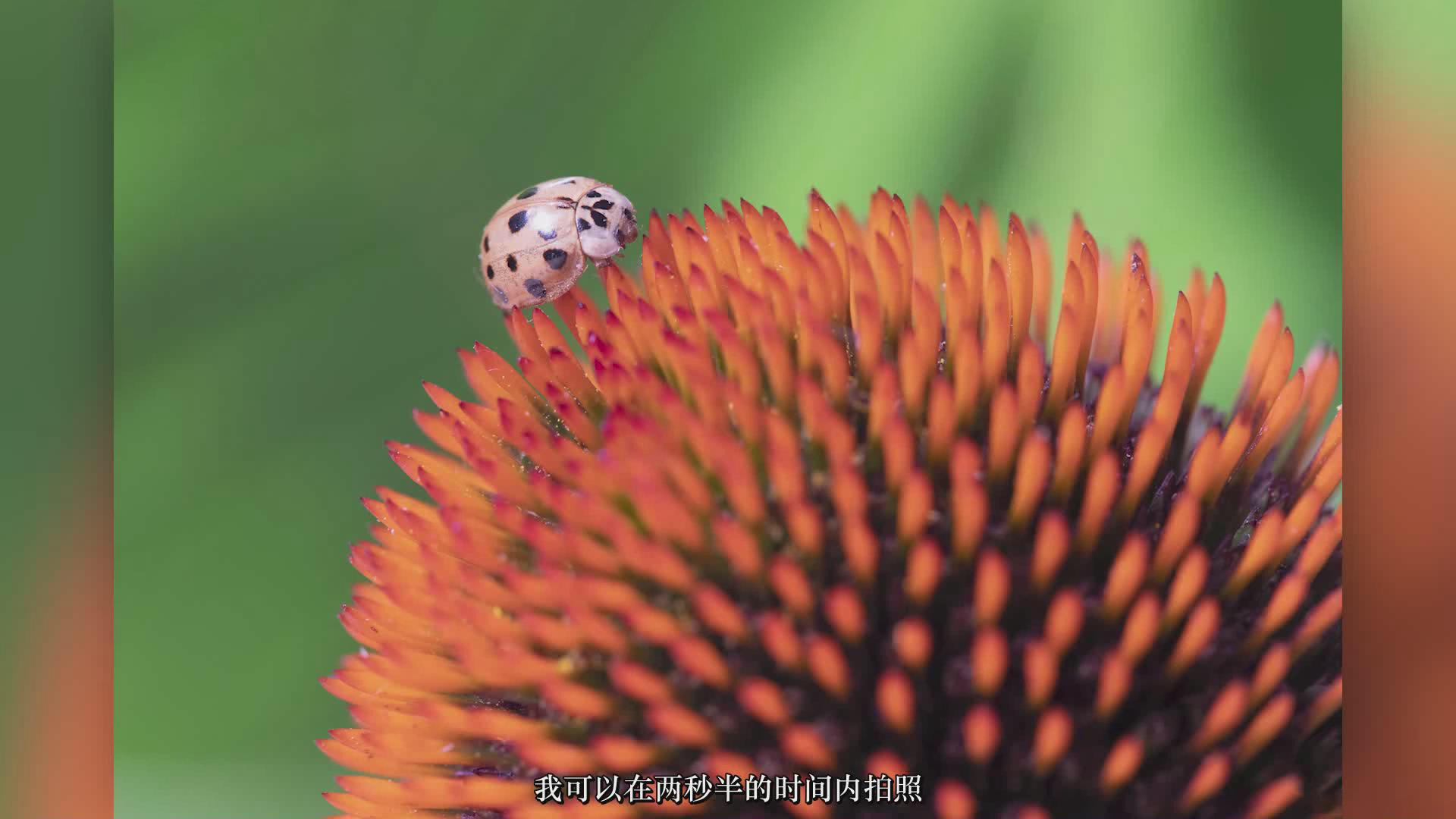 摄影教程_JOSHUA DUNLOP-掌握宏观微距摄影-捕捉惊人的细节-中文字幕 摄影教程 _预览图6