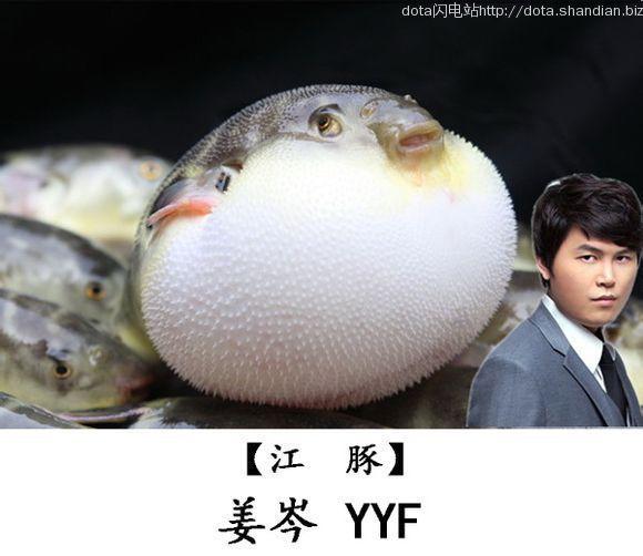 江豚YYF