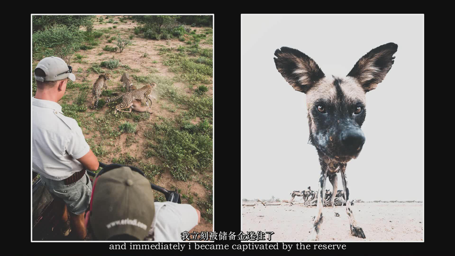 摄影教程_Chase Teron的终极野生动物摄影及后期套装教程附RAW素材-中英字幕 摄影教程 _预览图4