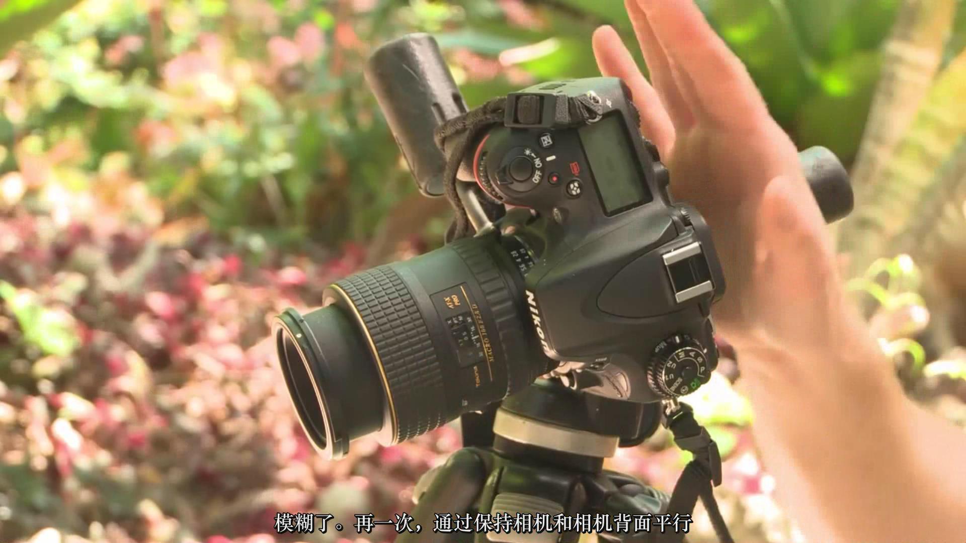 摄影教程_Craftsy –宏观摄影:精通昆虫微距摄影完整指南教程-中文字幕 摄影教程 _预览图5