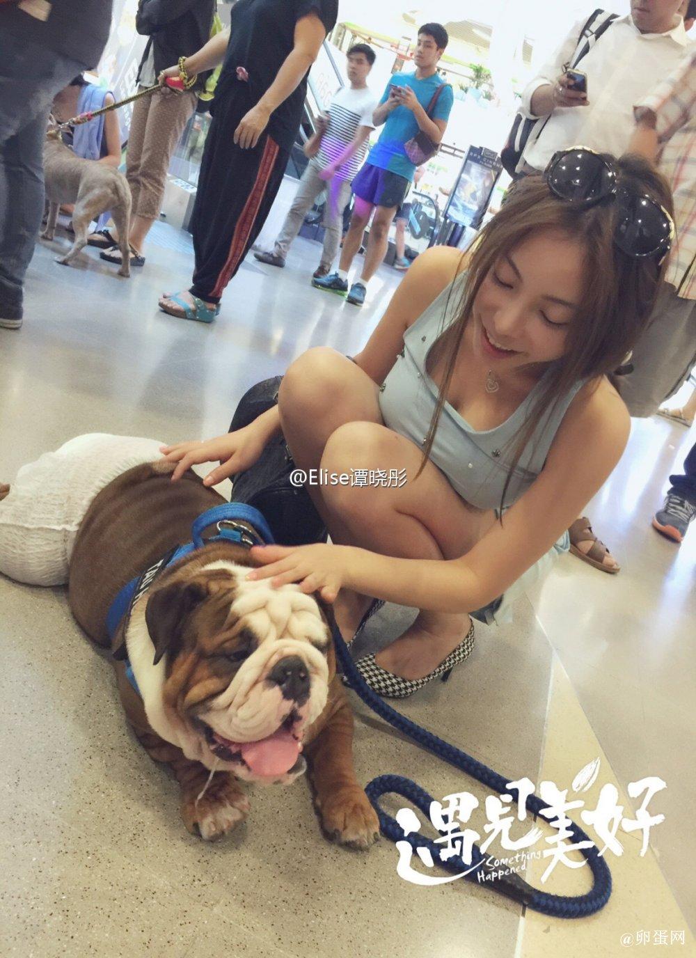 福利汇总推荐第49期:可爱的狗狗
