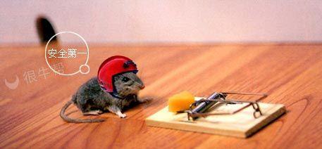 老鼠:安全第一~