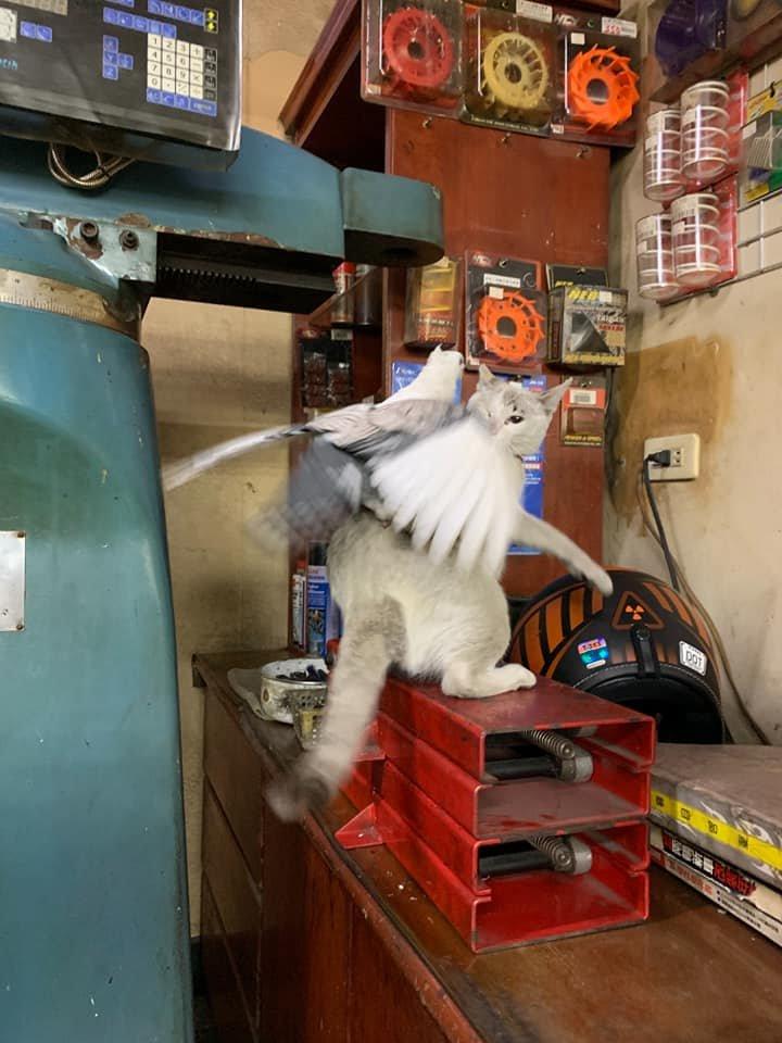 搞笑图片喵:这只鸽子太烦人了!by/FB/张家源