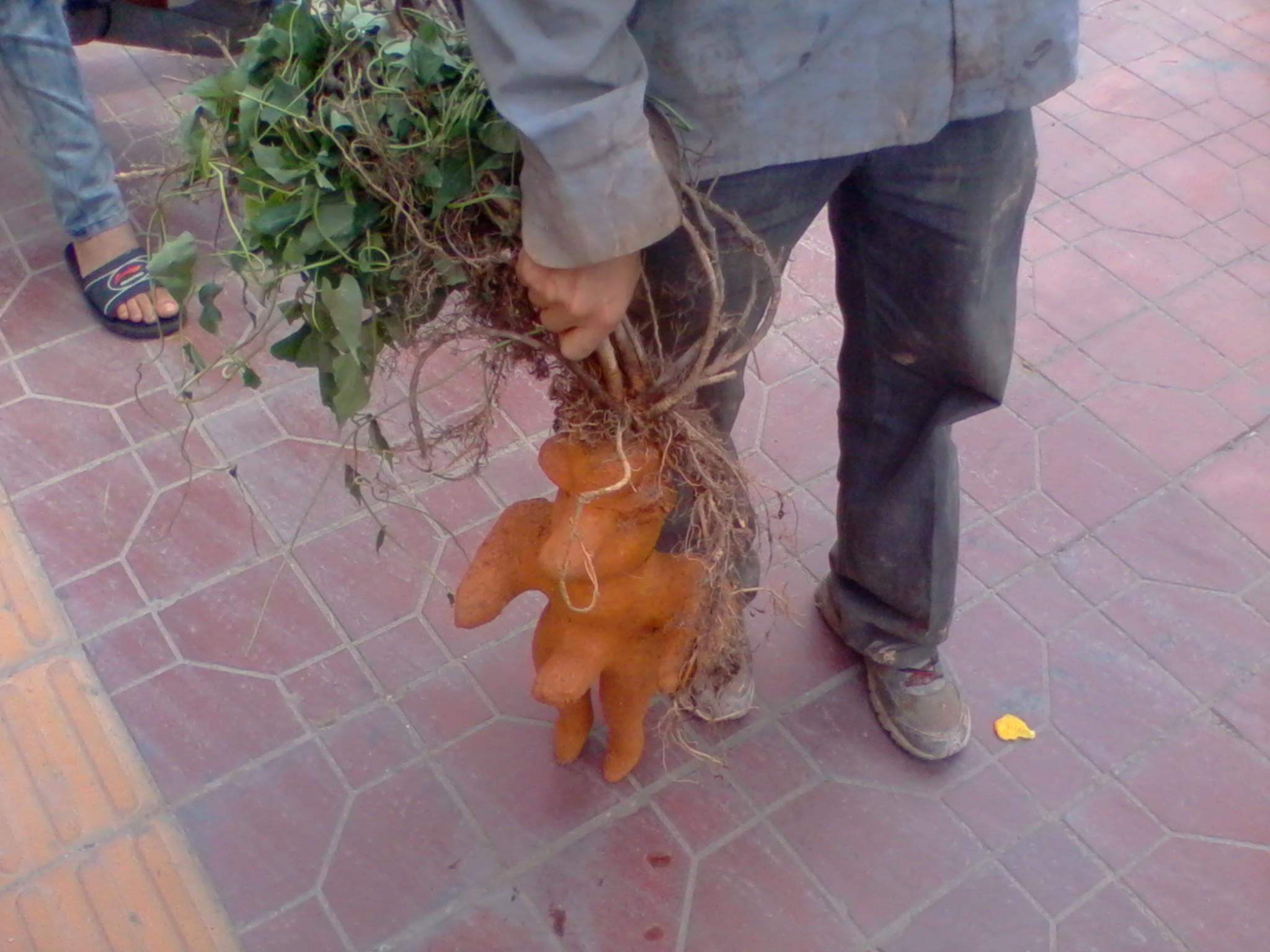 动物搞笑图片来福岛_这样的植物,能长的再邪恶点么_奇闻怪事_来福讲笑话