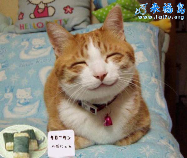 动物搞笑图片来福岛_会笑的猫_动物图片_来福讲笑话
