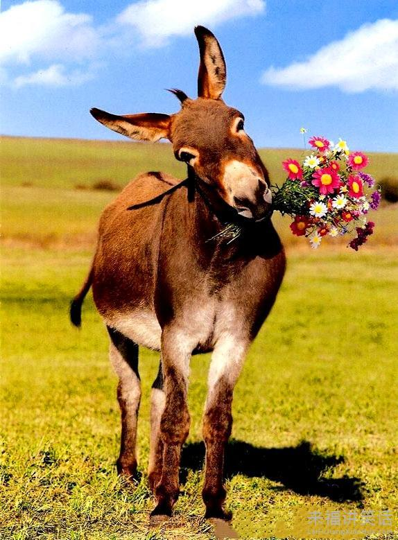 qq表情快捷键_小驴向谁求婚?_动物图片_来福讲笑话