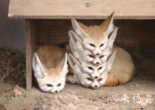 动物搞笑图片来福岛_这是做什么呢?_动物图片_来福讲笑话