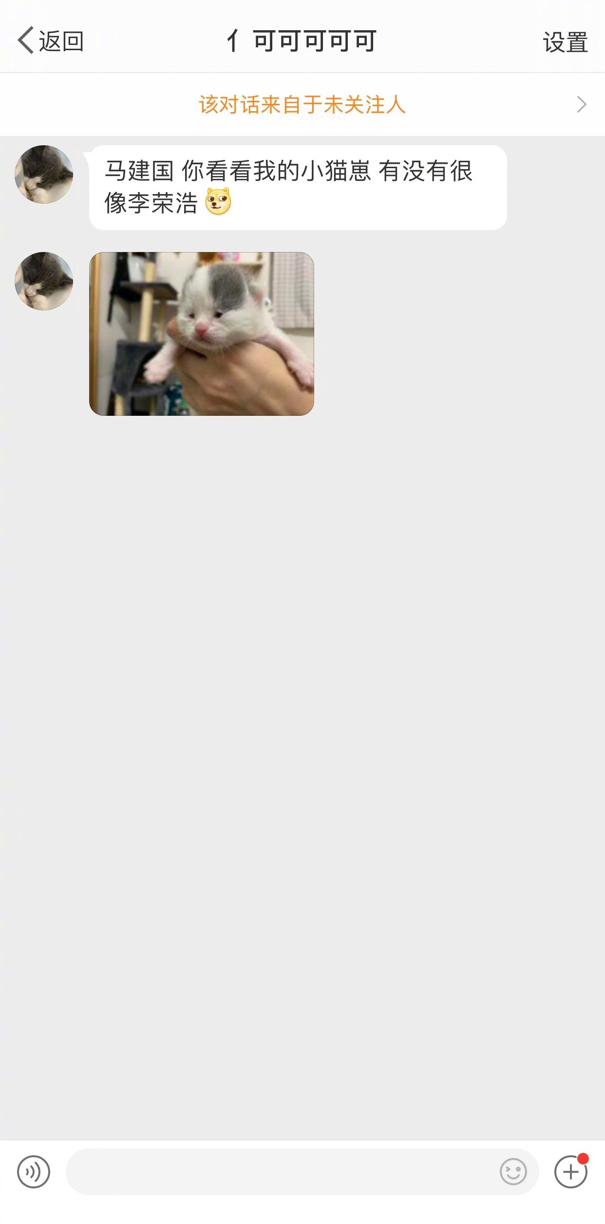 萌宠图片超像李荣浩的小奶猫-萌宠