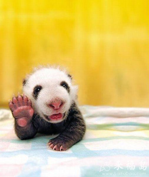 动物搞笑图片来福岛_嗨,大家好_动物图片_来福讲笑话