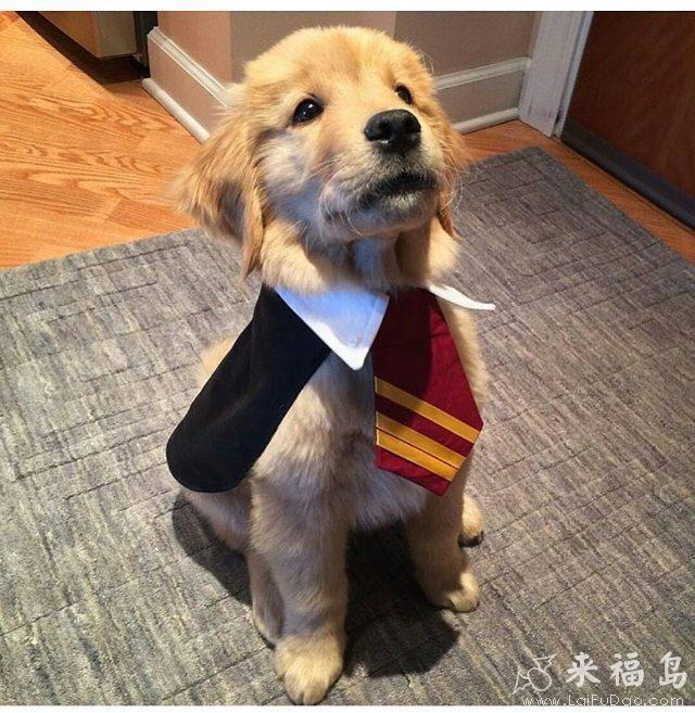 动物搞笑图片来福岛_大家好,我叫绅士汪!_动物图片_来福讲笑话