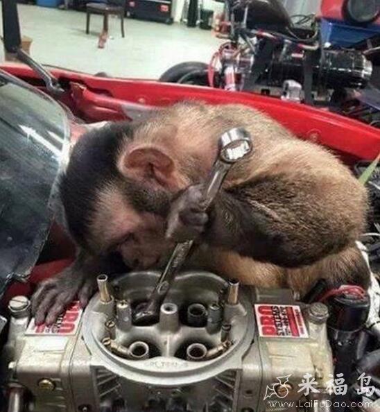 动物搞笑图片来福岛_最近经济下行,只能雇一些便宜的工人。_动物图片_来福讲笑话