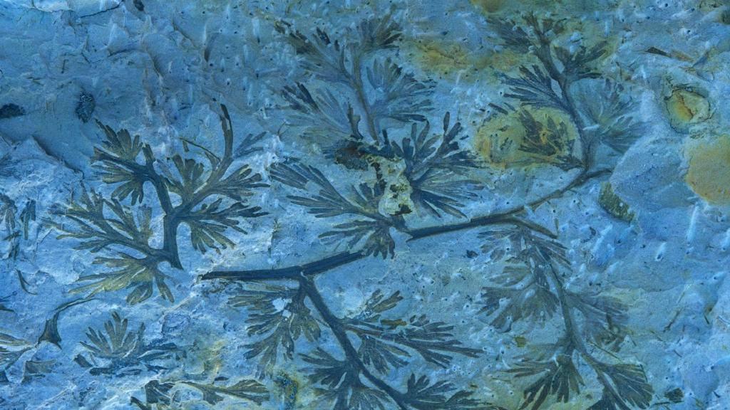 一块石炭纪蕨类化石