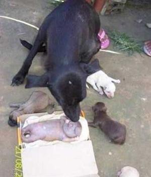 男人与母狗交配图片,超重口味!
