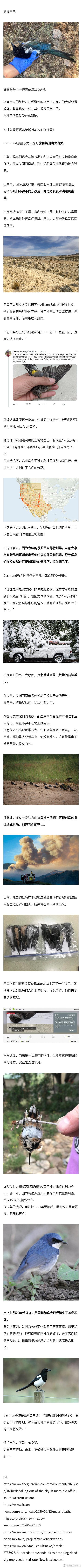 数十万只侯鸟在美国上空坠落死亡,整座山丘满是鸟的尸体