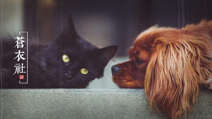 活体动物盲盒:开箱之后狗狗只活了13天