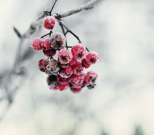 早安心语170211:我不要海誓山盟,只要你陪我走过每个春夏秋冬