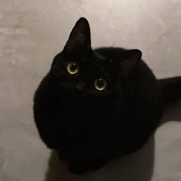 黑猫真的是人间宝藏