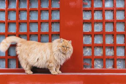窗台上的大黄故宫的猫#故宫的猫#